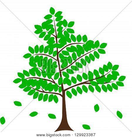 deciduous  tree , beech. vector, green tree,