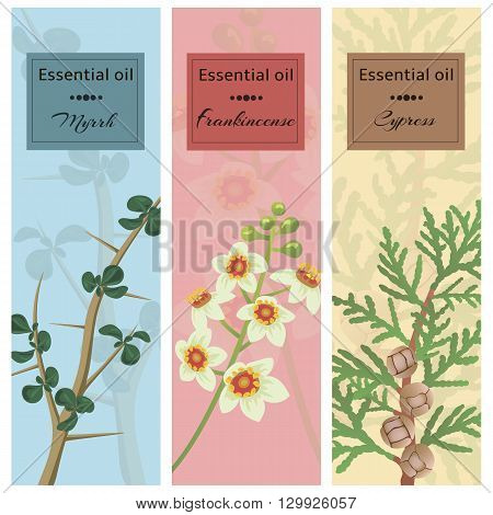 Essential oil set collection. Myrrh frankincense cypress banner set. Vector illustration EPS 10.