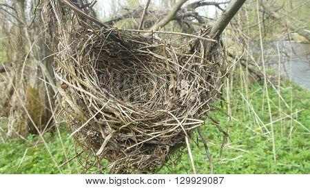 Красивое и заброшенное птичье гнездо коло реки