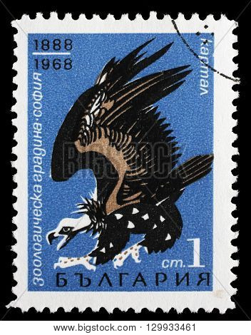 ZAGREB, CROATIA - JUNE 25: a stamp printed in Bulgaria shows Cinereous Vulture(Aegypius monachus), 80 years zoo of Sofia, circa 1968, on June 25, 2014, Zagreb, Croatia