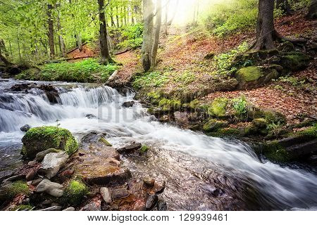 Threshold on the river flowing in the green forest
