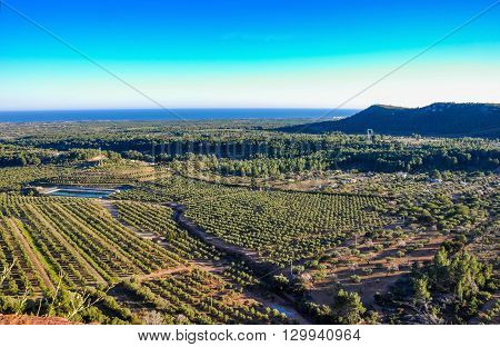 Aerial View Of Olive Groves In Mont-roig Del Camp (spain).