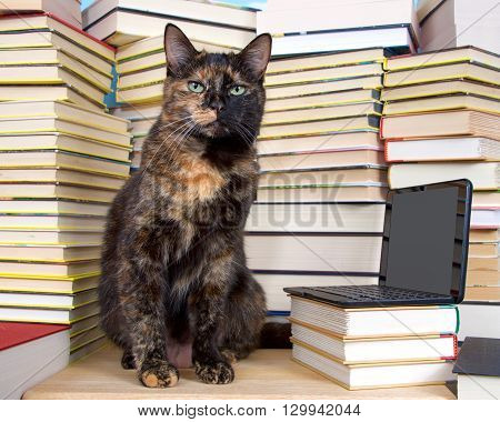 Tabby Cat Sitting In Front Of Stacks Of Books With Miniature Laptop Type Computer