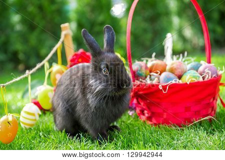 easter rabbit and easter eggs in spring day