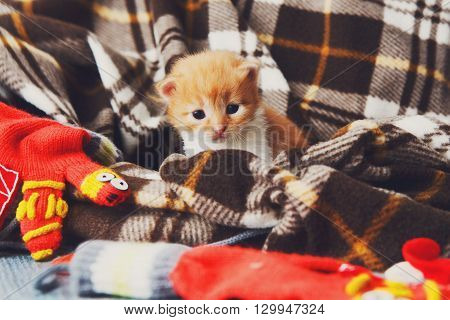 Kitten and mittens. Red orange newborn kitten near a plaid blanket. Sweet adorable tiny kitten on a serenity blue wood background. Funny kitten crawling and meowing