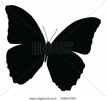 Silhouette of butterfly, isolated on white, vector illustration of butterfly