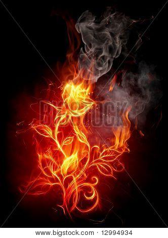 Rosa de fuego