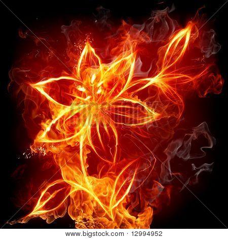 Lirio de fuego