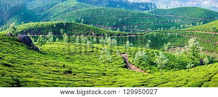 Panorama of green tea plantations on sunrise in Munnar, Kerala, India