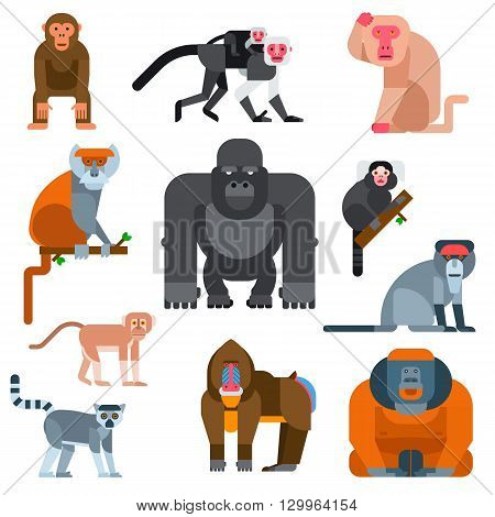 Set of cartoon monkeys vector illustration. Monkey collection and jungle monkey big set. Monkey cute types and cute primate monkey. Monkey species cheerful zoo jumping chimpanzee mammal.