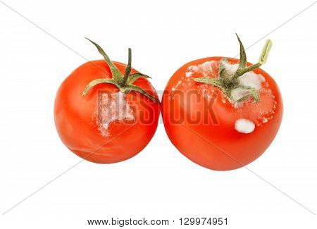 Molded Red Tomato