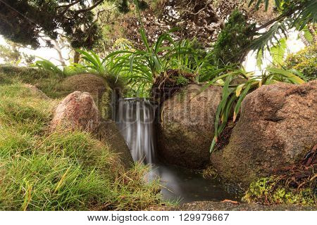 Relaxing, zen like pond with a waterfall, koi fish and tropical plants.