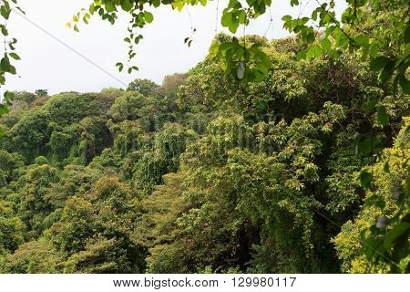 Thick Rainforest And Trees On Mount Faber In Singapore