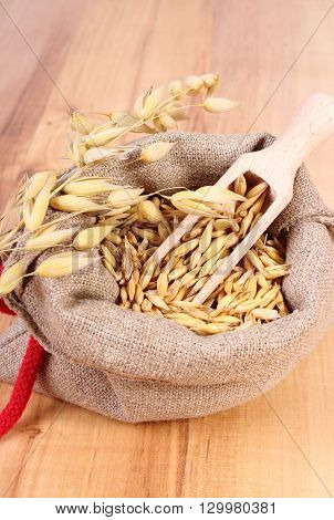 Heap of organic oat grains with wooden spoon in jute bag ears of oat healthy food and nutrition