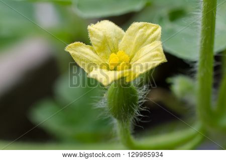 Little Baby Watermelon And Flowers