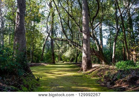 Quinta Santo da Serra park, green forest in the sunny day. Madeira, Portugal.