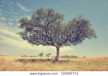 Beautiful landscape with acacia tree in Africa
