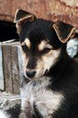 The Mistrustful Puppy.