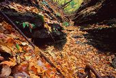 picture of winnebago  - Beautifully colored fall leaves fill a canyon at Kishwaukee Gorge Forest Preserve in northern Illinois - JPG
