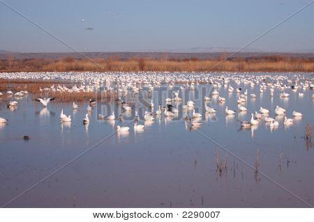 Wetland Refuge