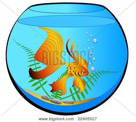 Aquarium With Gold Fish And Algae