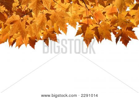 Fall Leaves With Blank Background