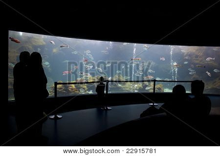 Visitors At The Aquarium Silhouette