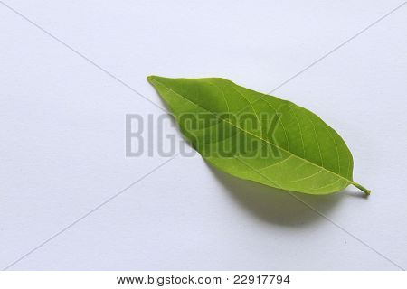 Leaf Isolated