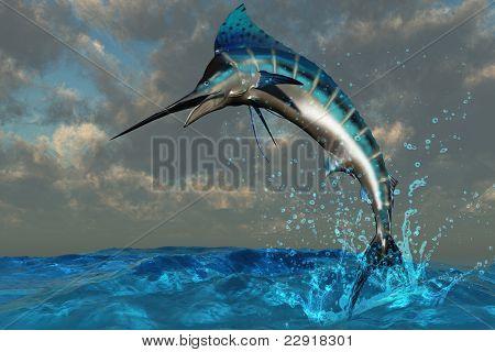Marlin azul Splash