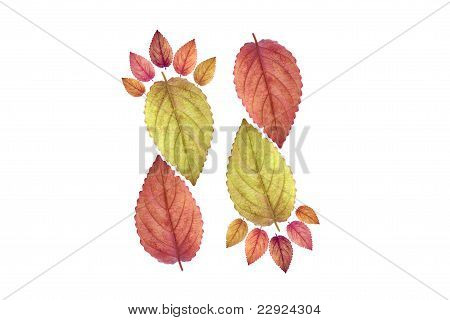 Color leaf footprint