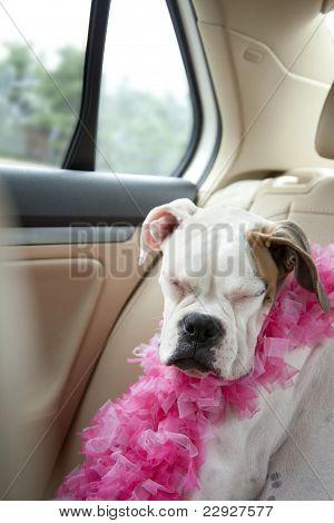 dog sleeping in back seat of car
