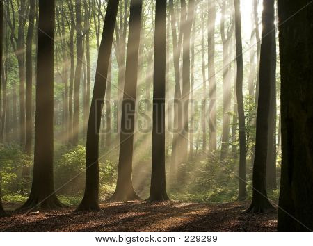 Bosque de Misty