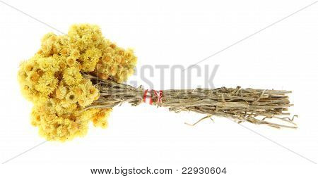 Medicinal Herbs, (helichrysum)
