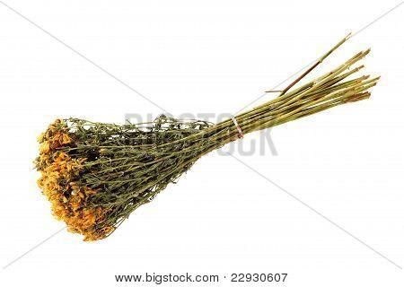 Medicinal Herbs, (hypericum Elodes)
