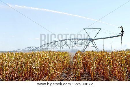 Sprinkler in the corn field