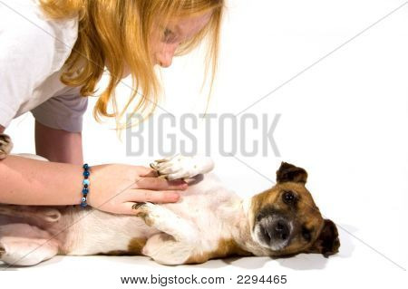 Little Girl And Jack Russel