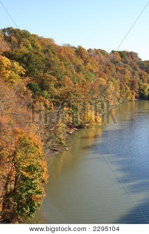 Riverside Foliage