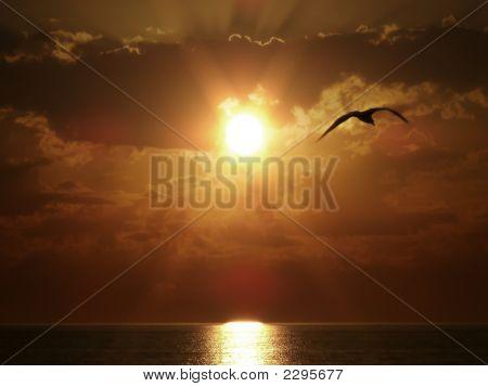 Flying Bird On Sea Sunset