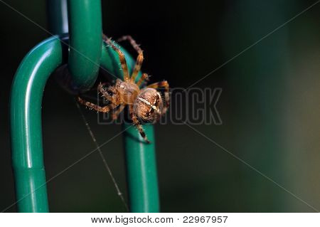 Brown Recluse Spider On Swing