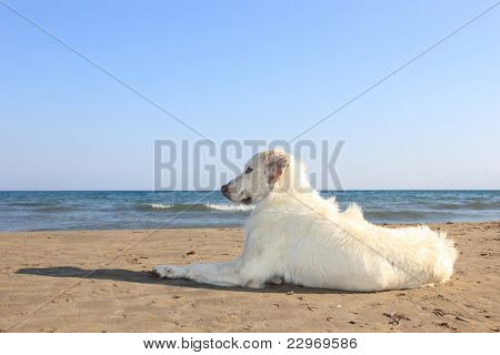 dog on the beach in greece