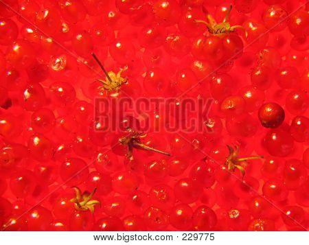Background Of Stone Bramble Berries