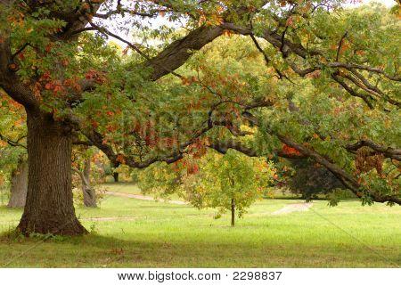 Un roble en un parque, mostrando los colores del otoño