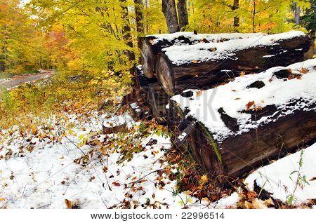 Abandoned Logs