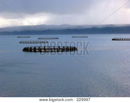 Ocean Salmon Farm