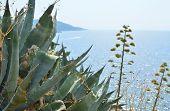 Coastal Plants And Sea poster