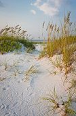 stock photo of sea oats  - Path with footprints in the sand dunes with colorful sea oats at the beach in summer - JPG