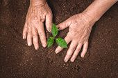 Plant A Tree Growing Plant The Soil And Seedlings In The Old Hand poster