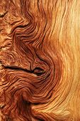 stock photo of contortion  - contorted brown and tan wood grain from alpine pine tree roots - JPG