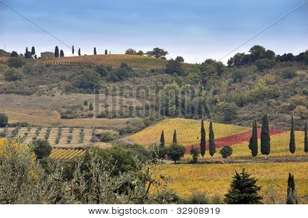 Tuscany Fields