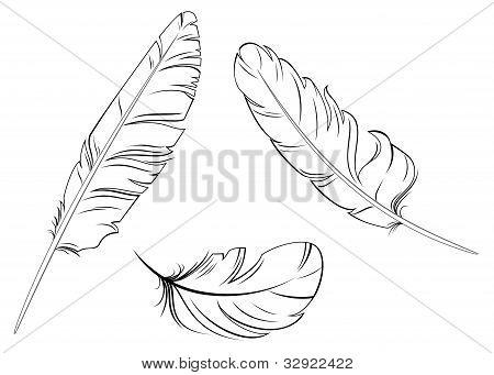 Conjunto de plumas